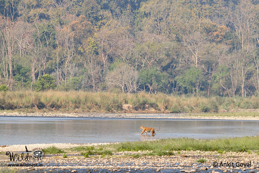 Corbett wildlife destinations near delhi