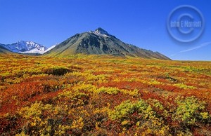 Kluane National Park, Canada. Boy, do I pity you if you're reading this post from your office.