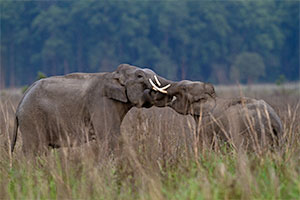 wildlife photography tours india