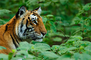 tiger tours and safari india