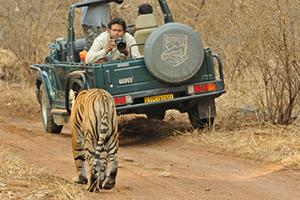 ranthambore tiger safari