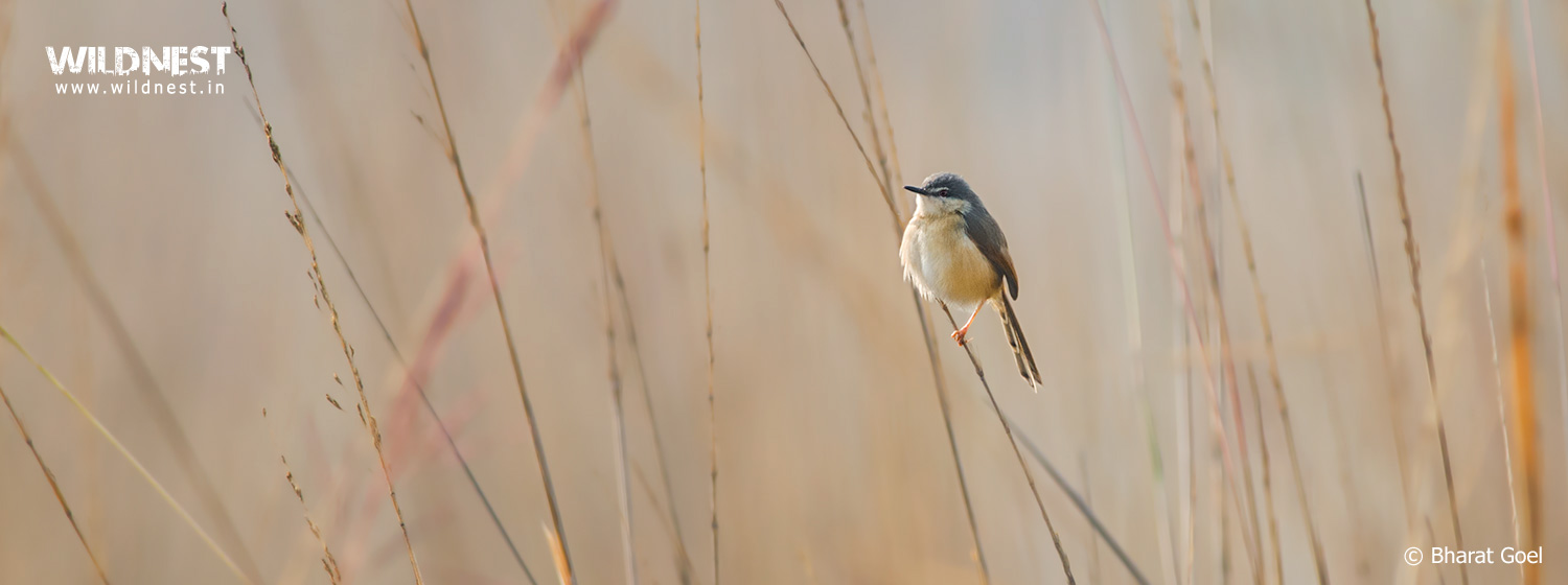 Bird Photography at sultanpur national park