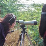 birding at sultanpur national park