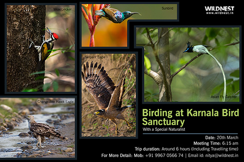 Birding at Karnala Bird Sanctuary