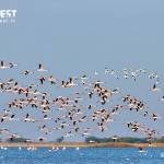 flamingos flying at little rann of kutch