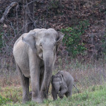 elephant with baby at rajaji national park