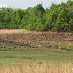 spotted deer landscape photography at tadoba andhari tiger reserve