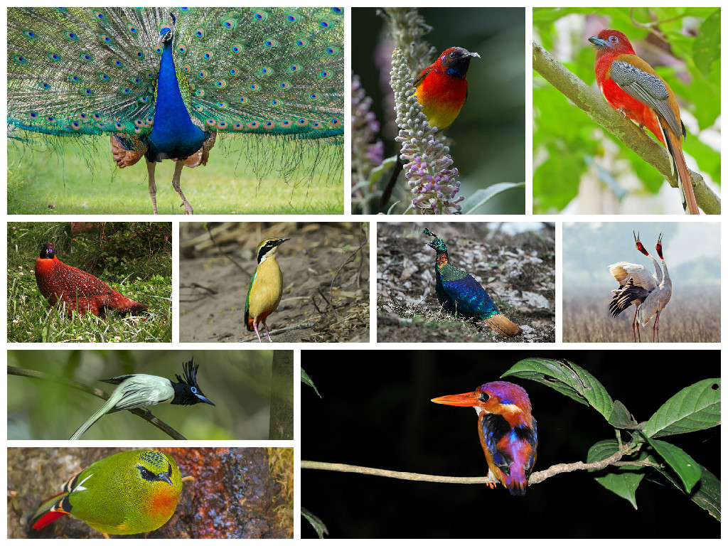 endangered birds of india essay Protect endangered species essay 91 endangered birds, 76 endangered an aphrodisiac in indonesia and something to assist women in childbirth in india and.