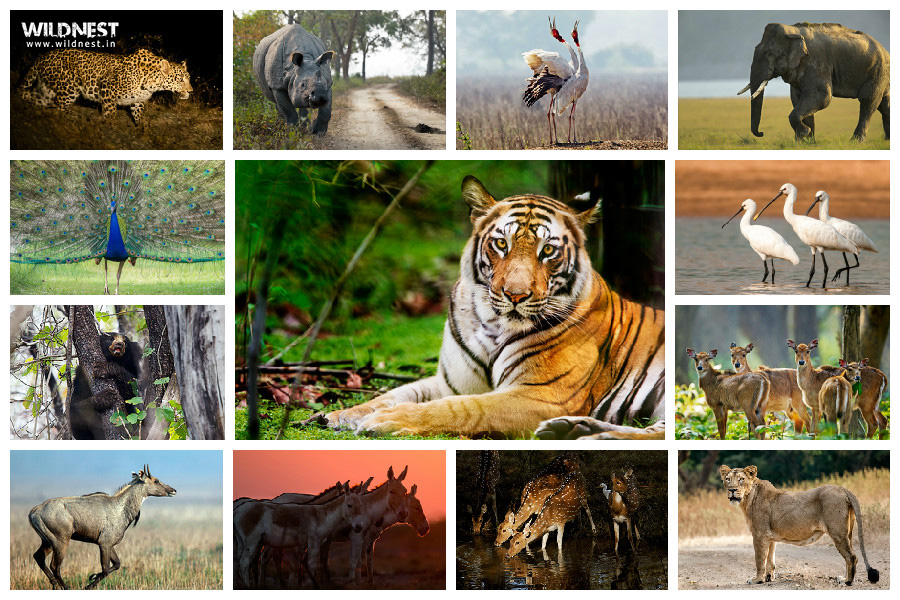 wildlife of india tours & photography