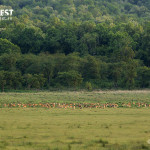 Group of Deer at Corbett Tiger Reserve