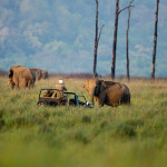 Jeep Safari at Corbett Tiger Reserve