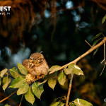 meeting of owlet at delhi