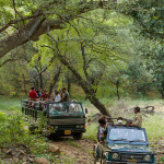 Jeep & Canter Safari at Ranthambore National Park