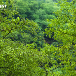 Sariska Tiger Reserve during monsoons