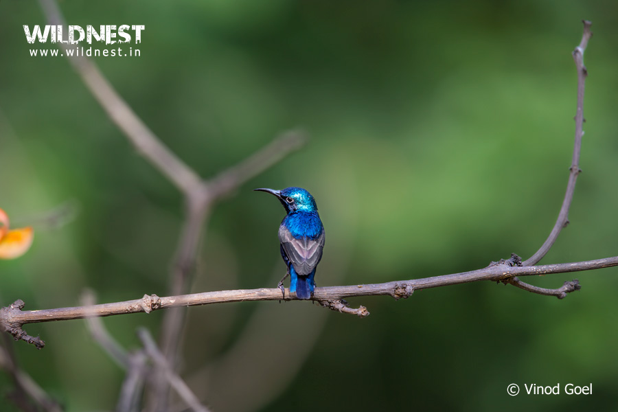sunbird photography at delhi