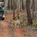 Jeep Safari at Tadoba Andhari Tiger Reserve