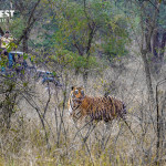 Jeep Safari at Sariska Tiger Reserve