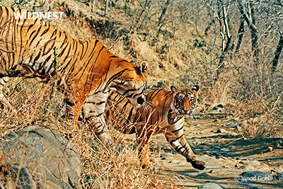 Wildlife with culture tours in India
