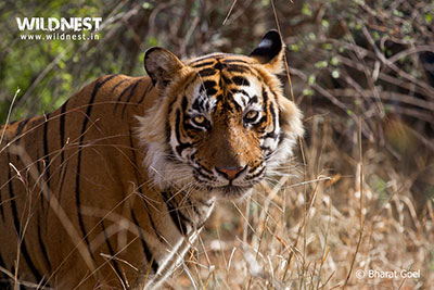 ranthambore weekend getaway 3 days tour