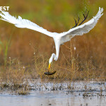 Birding near Delhi at Basai Wetlands near Gurgaon