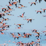 Flamingo Sanctuary  –A paradise in Mumbai