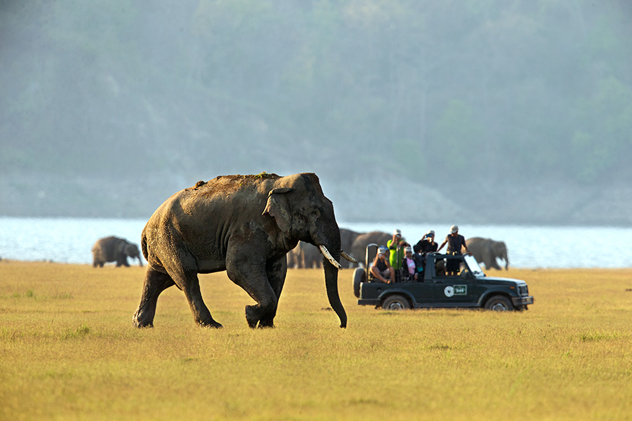 Wildlife Safaris in India