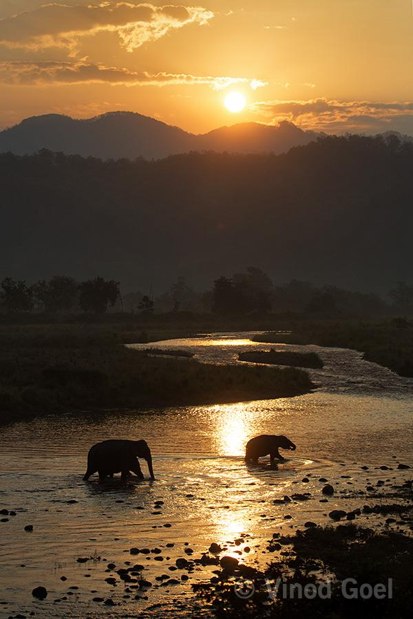 Elephant in the early morning at Corbett Tiger Reserve
