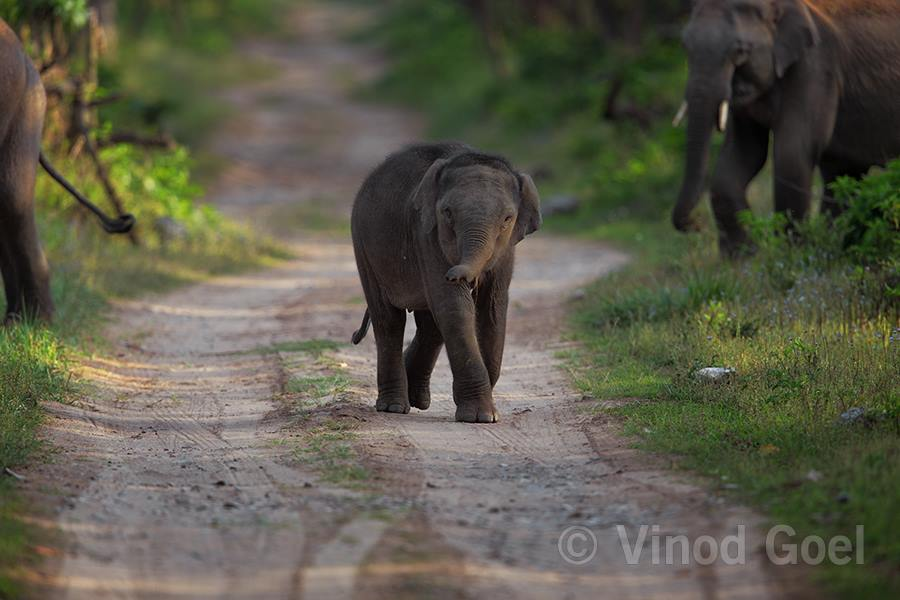 Elephants with cub at Rajaji National Park