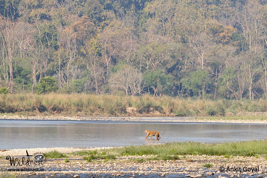 Corbett wildlife destinations near delhi