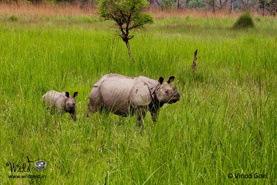 Dudhwa wildlife destinations near delhi