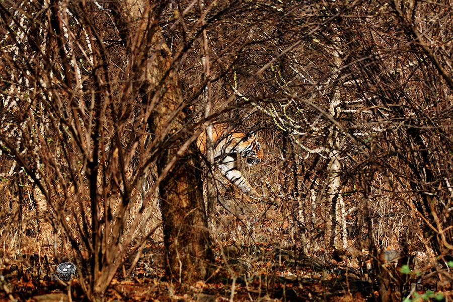 Ranthambore wildlife destinations near delhi