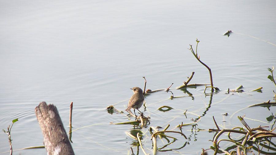 birding at sultanpur