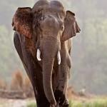 elephant photography at corbett tiger reserve