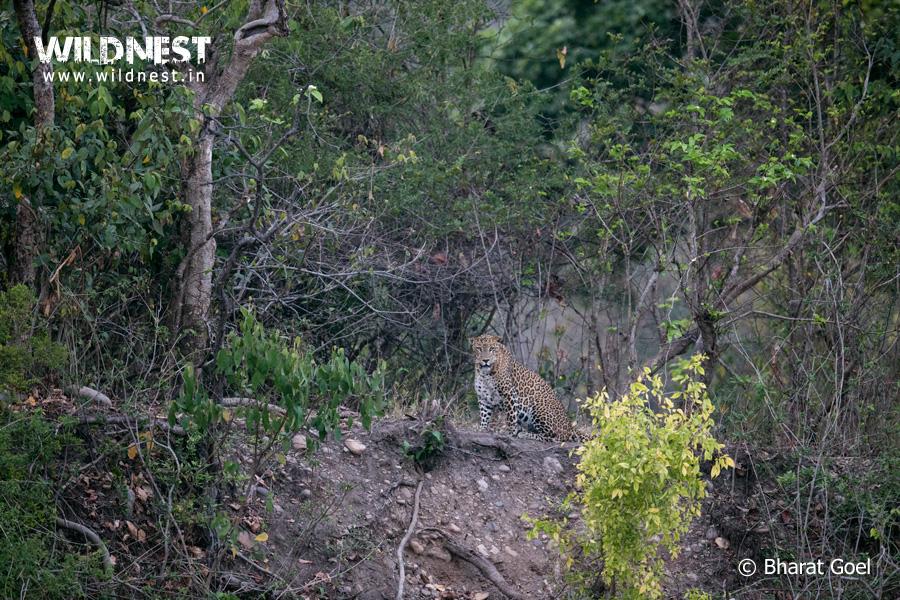 Rajaji Wildlife Destinations Near Delhi