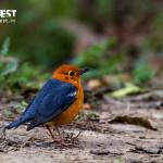 Bird photography at kaziranga national park