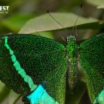 Butterfly at Tadoba Andhari Tiger Reserve
