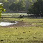 Spotted Deer in habitat at Tadoba Andhari Tiger Reserve