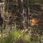 Deer at Tadoba Andhari Tiger Reserve