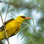 Sunbird potrait photography at delhi