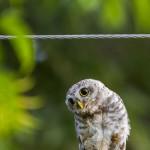 owlet photography at delhi