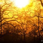 Sunset at Tadoba Andhari Tiger Reserve