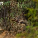 Tiger cubs at Tadoba Andhari Tiger Reserve