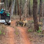 Jeep Safari at Tadoba Andhari Tiger Reserve