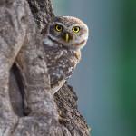 Owl - Sunder Nursery Nizamuddin Delhi