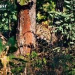 Leopard at Tadoba Andhari Tiger Reserve