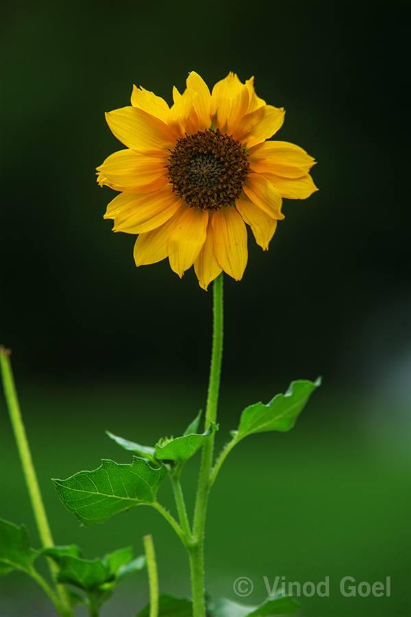 Flower at Delhi