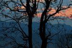 Morning at Corbett Tiger Reserve