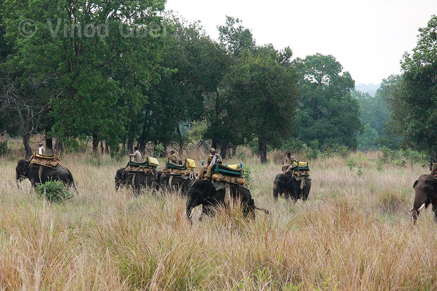 Tiger Show at Kanha National Park