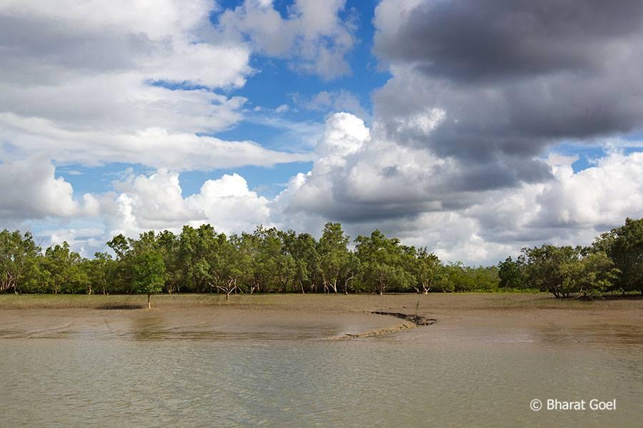 Sundarban Tiger Reseve